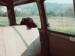 black dog in back of car