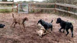 dog park mud