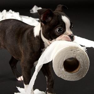 puppy-toilet-paper